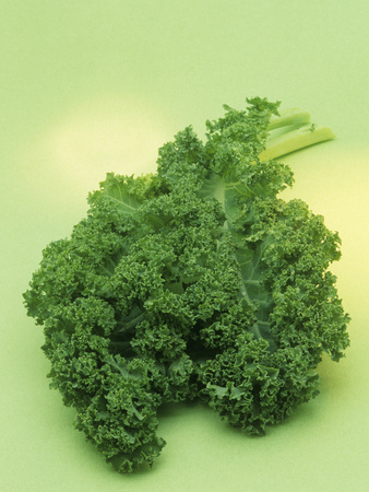 Kale (Brassica Oleracea) Photographic Print by Wally Eberhart