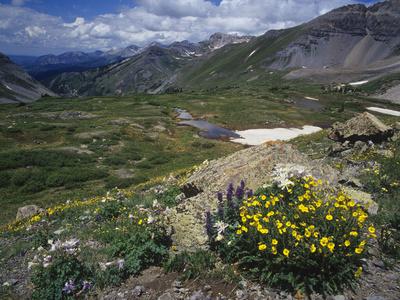 Alpine Mountian Summer Meadow with Wildflowers Photographic Print by Adam Jones
