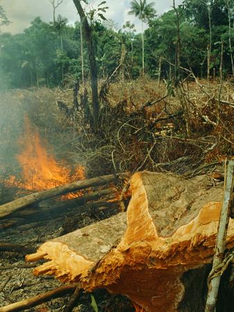 Slash-And-Burn Agriculture, Amazon Region, Acre, Brazil Photographic Print by Jacques Janqoux