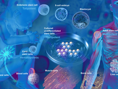 Stem Cell Research Photographic Print by Carol & Mike Werner