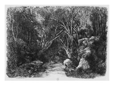 The Stream Through the Trees, 1880 (Etching) Premium Giclee Print by Rodolphe Bresdin