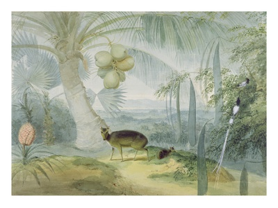 A Landscape in Ceylon, with Barking Deer and Fawn and a Pair of Paradise Fly-Catchers, C.1808-11 Premium Giclée-tryk af Samuel Daniell