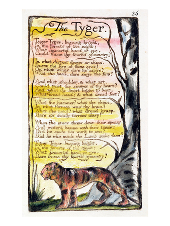 The Tyger', Plate 36 (Bentley 42) from 'Songs of Innocence and of Experience' (Bentley Copy L) Premium Giclee Print by William Blake