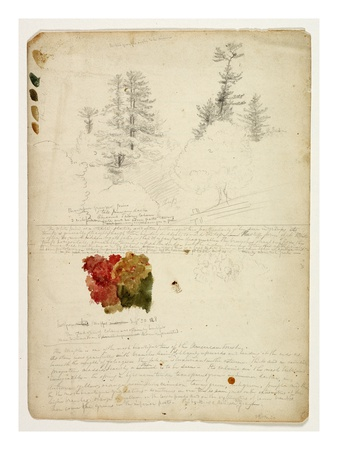 Beautiful Groups of Pines; Tints from Maples, New Hampshire, September 30th 1828 Premium Giclee Print by Thomas Cole