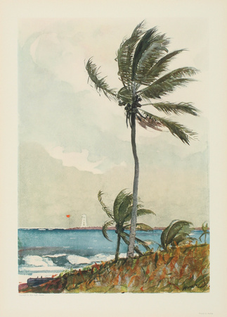 Palm Tree, Nassau Collectable Print by Winslow Homer