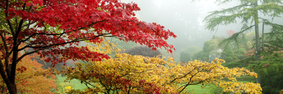 Trees in a Garden, Butchart Gardens, Victoria, Vancouver Island, British Columbia, Canada Photographic Print by  Panoramic Images