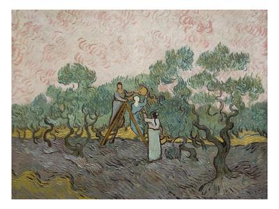 Women Picking Olives Prints by Vincent van Gogh