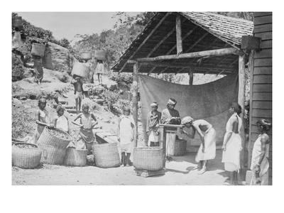 Weighing Ceylon Tea Print