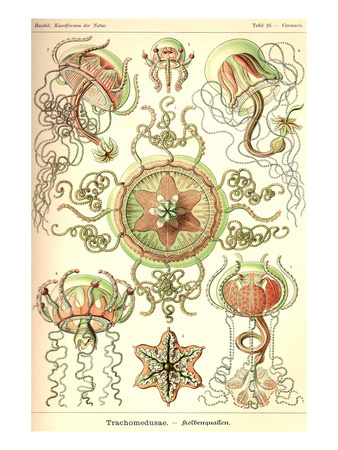 Trachomedusae - Jellyfish Posters by Ernst Haeckel