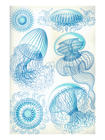 Jelly Fish Print by Ernst Haeckel