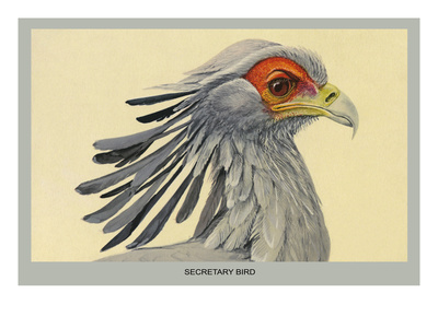 Secretary Bird Poster by Louis Agassiz Fuertes