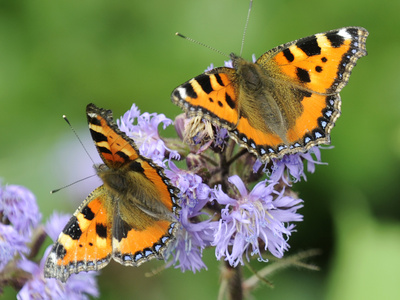 DEU Wetter Sschmetterling Photographic Print by Winfried Rothermel