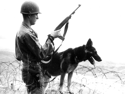 Dogs in Vietnam Photographic Print by  Associated Press