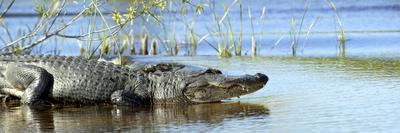 Everglades Restoration Photographic Print by J. Pat Carter