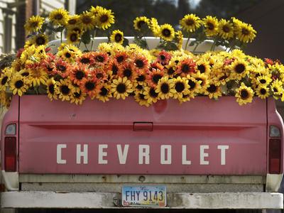 Chevrolet Photographic Print by Amy Sancetta