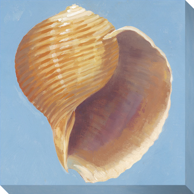 Conch Shell Stretched Canvas Print