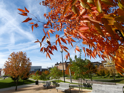 University of Cincinnati - Fall Scene Foto