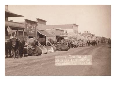 Ox Teams in the Dakota Territory Posters by John C.H. Grabill