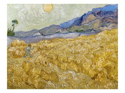 Van Gogh: Wheatfield, 1889 Premium Giclee Print by Vincent van Gogh