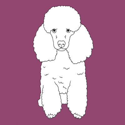 Poodle Art by Anna Nyberg