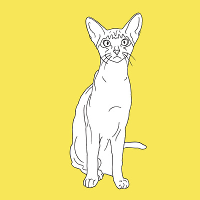 Cat With Big Ears Prints by Anna Nyberg
