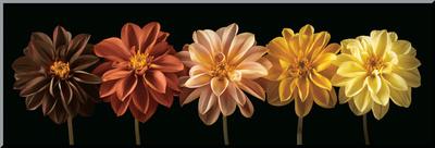Floral Salute Lámina montada en tabla