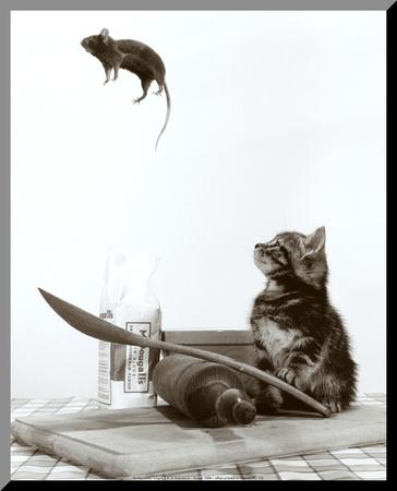 Kočka a myš Reprodukce aplikovaná na dřevěnou desku