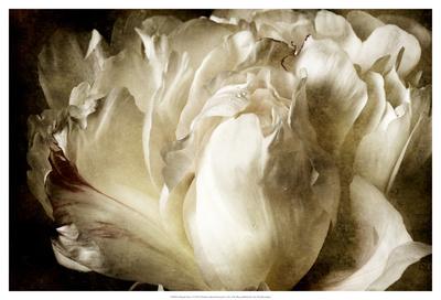Elegant Peony I Láminas por Christine Zalewski