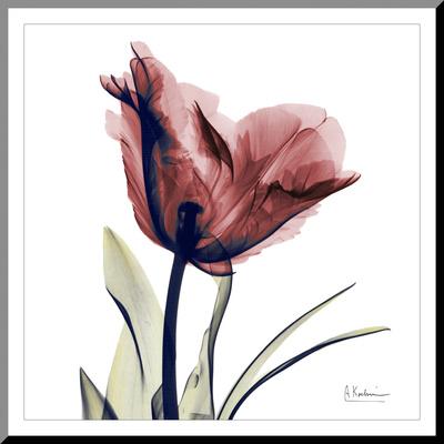 Single Tulip in Red Reprodukce aplikovaná na dřevěnou desku