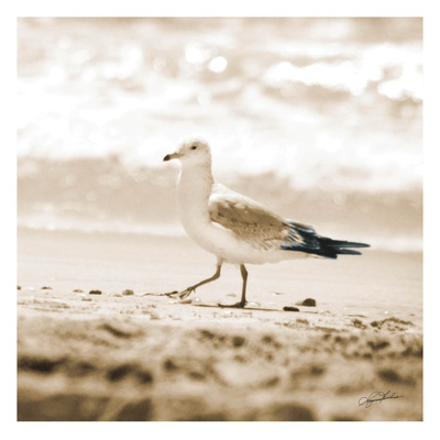 Seagull II Poster van Suzanne Foschino