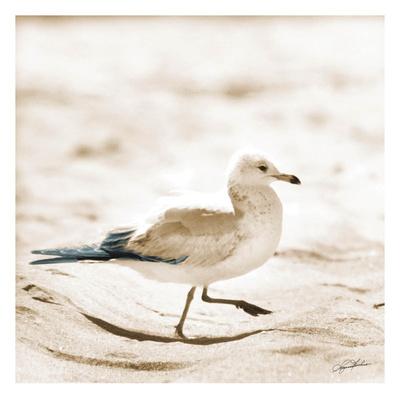Seagull III Posters van Suzanne Foschino