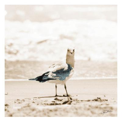 Seagull I Kunst van Suzanne Foschino