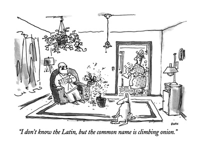 """I don't know the Latin, but the common name is climbing onion."" - New Yorker Cartoon Giclee Print by George Booth"