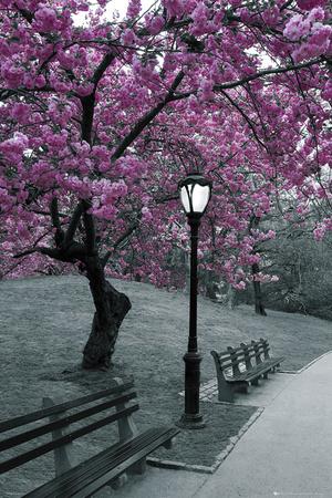 Central Park, florescer Pôster