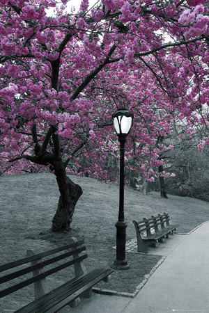 Central Park i blom Affischer