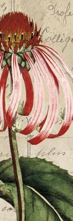 Jardin Botanique I Prints by Sabine Berg