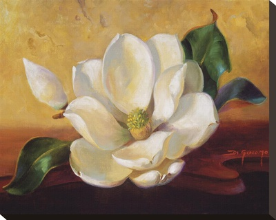 Magnolia Glow II Stretched Canvas Print by Fran Di Giacomo