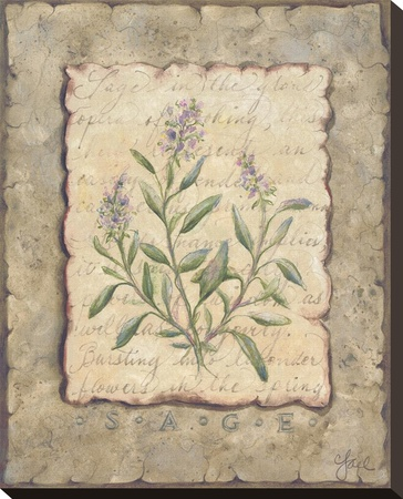 Vintage Herbs, Sage Stretched Canvas Print by Constance Lael