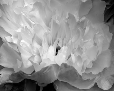 Macro Flower II Posters by Brian Moore