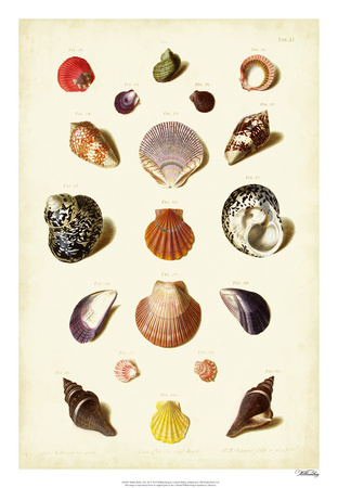 Muller Shells, Tab. XI Giclee Print by Gabriel Muller