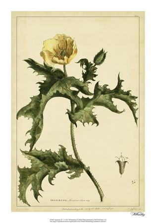 Argemone, Pl. L Giclee Print by Phillip Miller