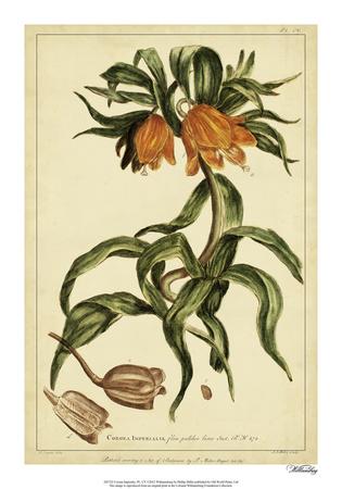 Corona Imperalis, Pl. CV Giclee Print by Phillip Miller