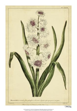 Hyacinthus, Pl. CXLVIII Giclee Print by Phillip Miller