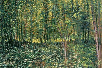 Skov og underskov, ca.1887 Posters af Vincent van Gogh