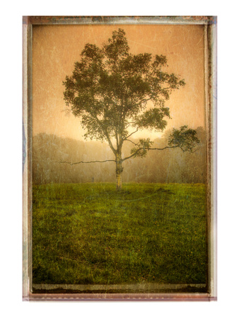 Tree Alone Photographic Print by Craig Satterlee