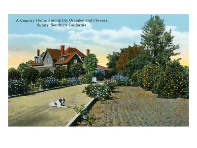 California - Country Home Among Oranges and Flowers Scene Prints by  Lantern Press
