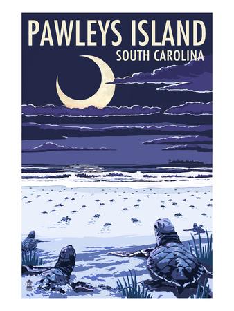 Pawleys Island, South Carolina - Baby Sea Turtles Posters by  Lantern Press