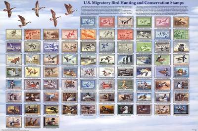 """U.S. Migratory Bird Hunting and Conservation Stamps """"Duck Stamps"""" Educational Poster Posters"""