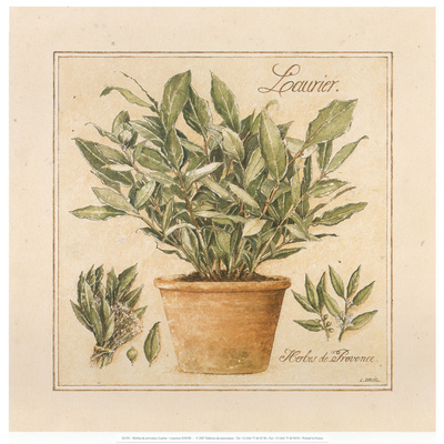 Herbes de Provence I Prints by Laurence David
