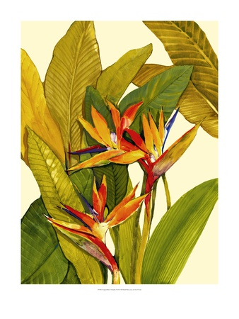 Tropical Bird of Paradise Art by Tim O'toole